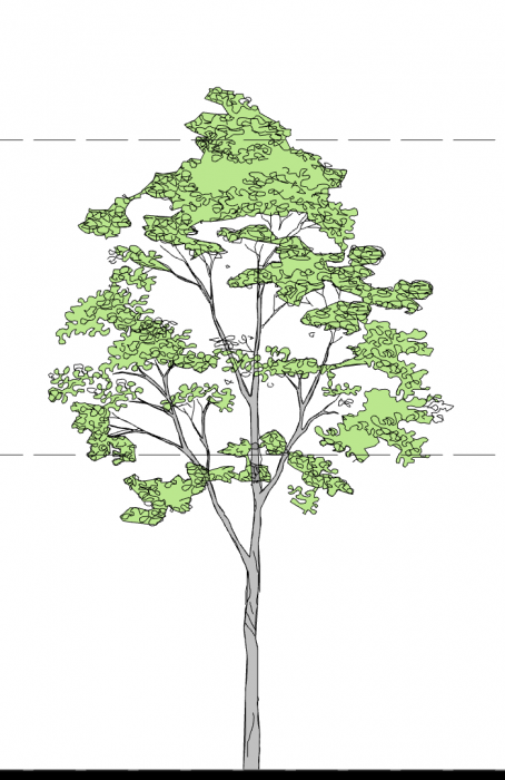 12_Smart-Tree-ELE