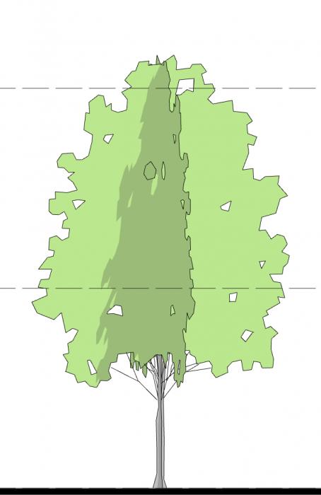 13_Smart-Tree-ELE