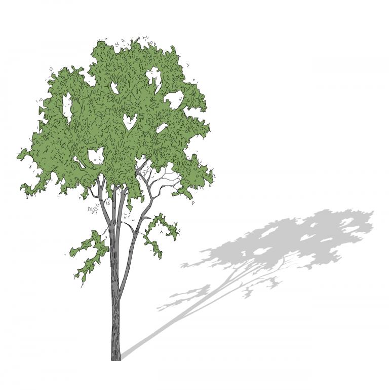 32_Smart-Tree-3D